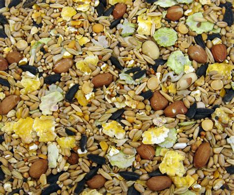 20 kg bulk sack wild bird winter food seed buy in bulk