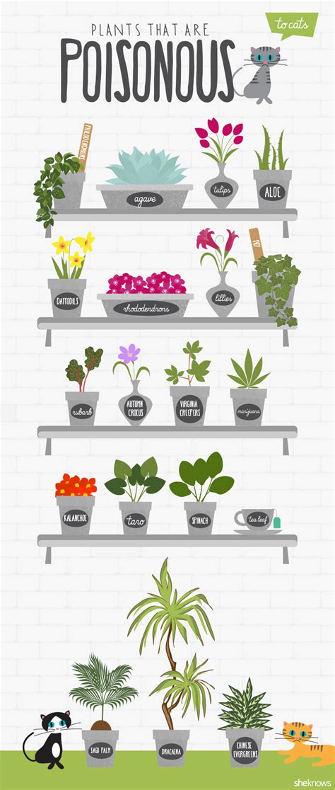 common house plants toxic to dogs house plants toxic to cats uk