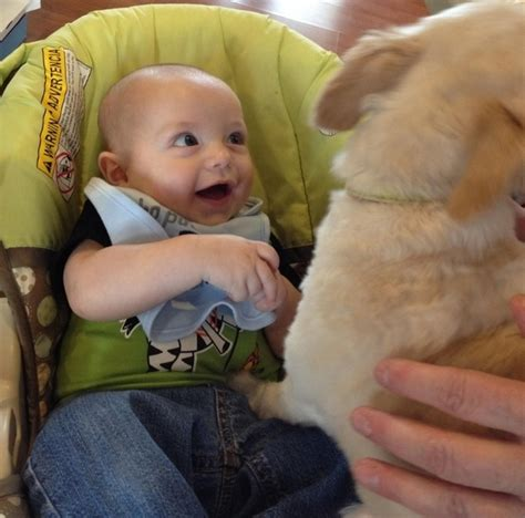 dogs meeting babies 21 babies meeting dogs for the time