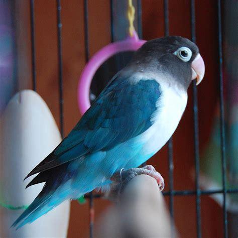 uccello in gabbia l uccello in gabbia canta per invidia o per rabbia