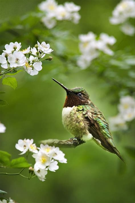 Hummingbird Garden Flowers 17 Best Images About Birds Bird Houses On Wildlife Photography Kite And