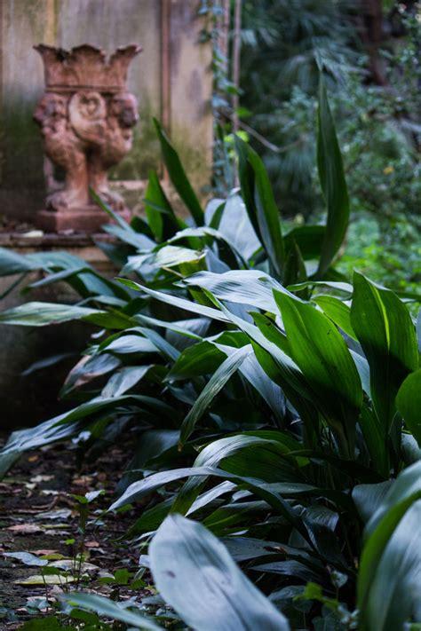 giardini antichi giardini antichi l aspidistra palazzo tartaglione