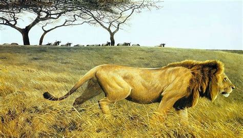 imagenes de paisajes salvajes los mas estupendos paisajes de animales salvajes estan