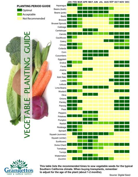 When To Plant Vegetable Garden by 25 Best Ideas About When To Plant Vegetables On