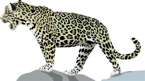 jaguar 3 clip at clker vector clip