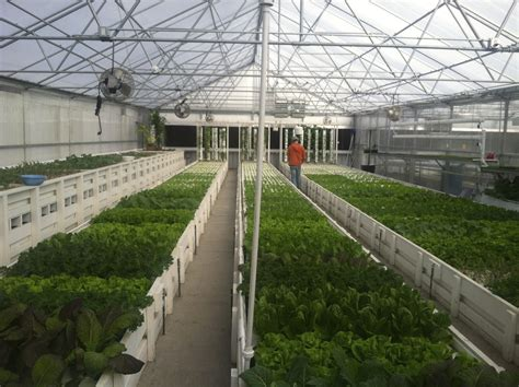 greenhouse layout design a guide to planning a commercial aquaponics greenhouse