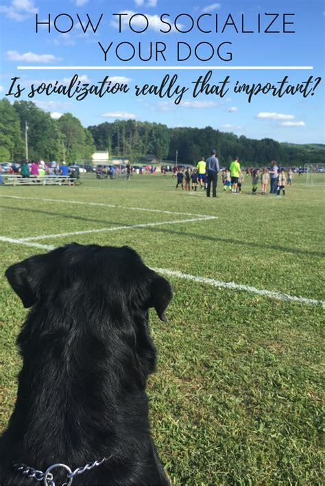 how to socialize a is it important to socialize your puppy how to socialize your sentinelspectrum
