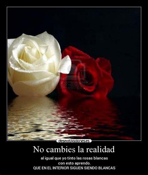 imagenes de rosas amarillas con frases rosas blancas con frases imagui