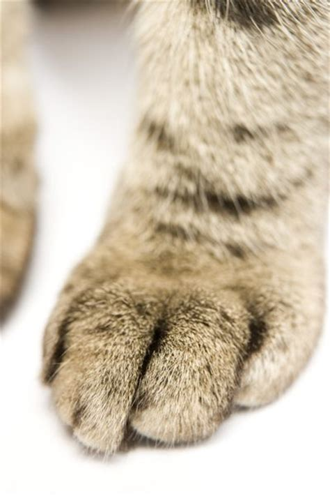 why does my his paws why does my cat me with his front paws pets