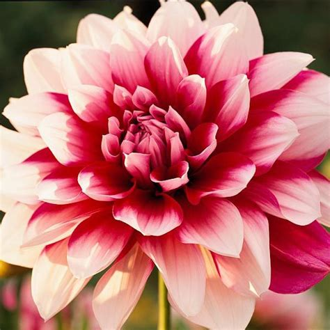 summer flowers the most popular blooms for every month the best summer bulbs