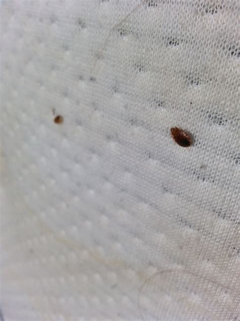 treating for bed bugs treat bed bugs 28 images how to prevent and treat bed