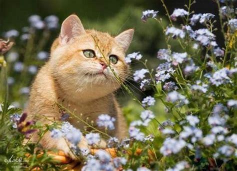 imagenes cool bonitas fotos muy bonitas de animales taringa