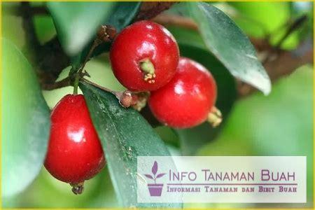 Garpu Buah Bentuk Hati T011160 bibit buah cherry buah cherry dengn bentuk atau hati dan rasa manis info