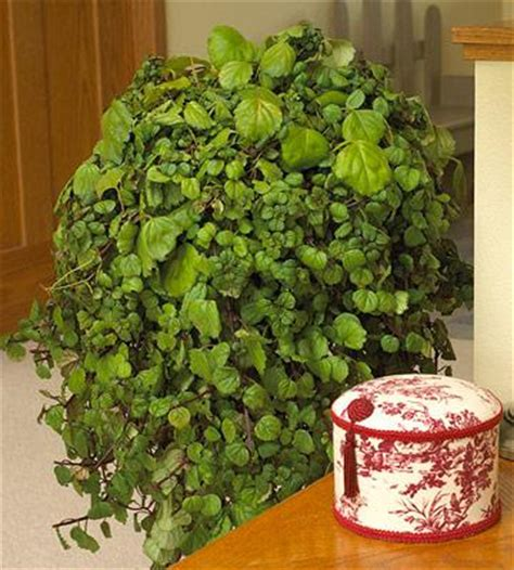 cascading indoor plants 20 super easy houseplants you ll love midwest living