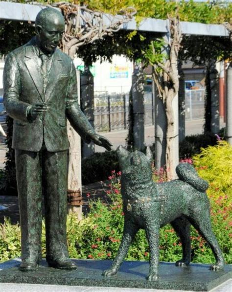 Hachi Top 40 best images about hachiko on loyalty