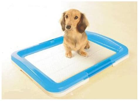 litter box a puppy litter box whereibuyit