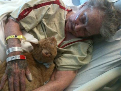 how to make a dying cat comfortable at home grandma jpg
