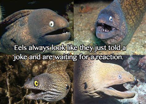 Bad Joke Eel Meme - image 234807 bad joke eel know your meme