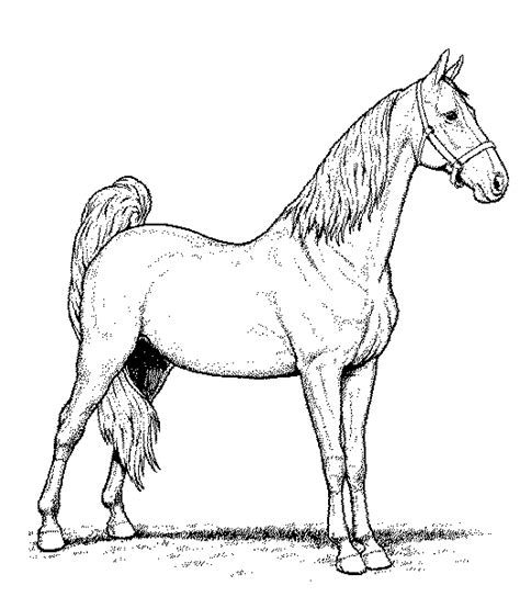 Horse Coloring Pages Coloringpages1001 Com Coloring Pages Horses