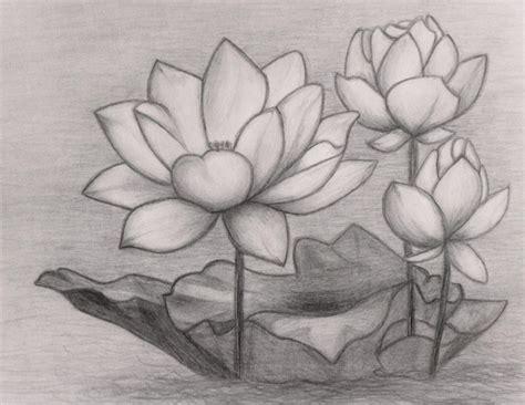 25 contoh sketsa gambar bunga yang mudah digambar