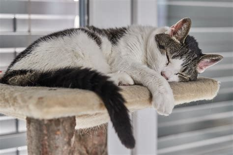 how many hours should a puppy sleep how should cats sleep for