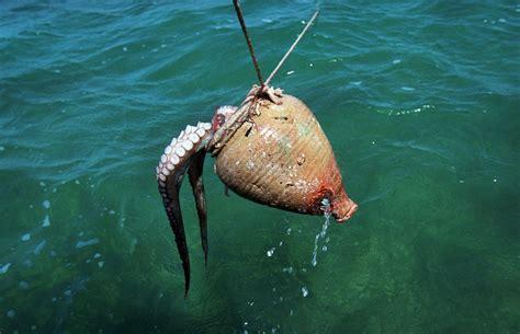 lacuna dei vasi la pesca polpo con le anforette