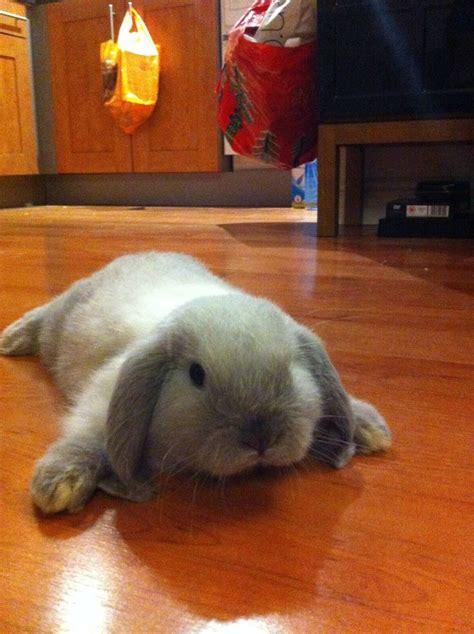 best bunny best 25 bunny bunny ideas on pet bunny