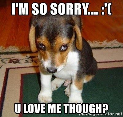 sad puppy love i m so sorry u love me though sad puppy meme