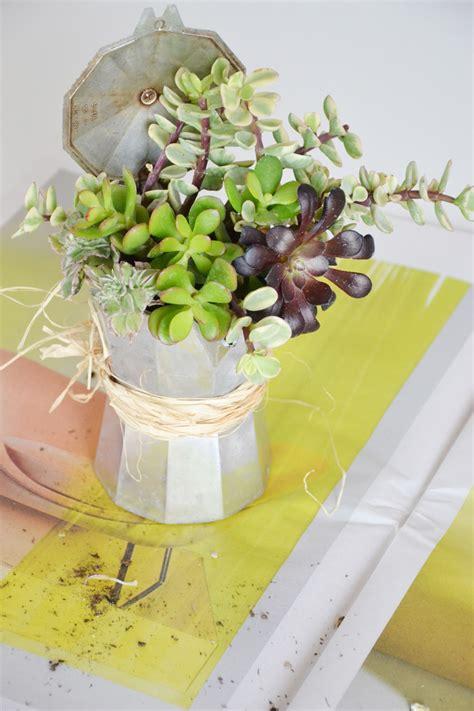 vasi piante grasse vasi piante grasse piccoli frutti vasi improvvisati