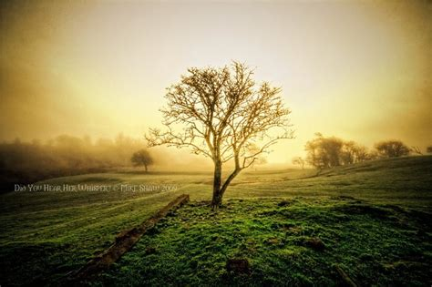 tree photography 50 most beautiful trees photography