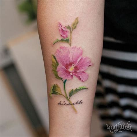 rose of sharon tattoo 25 best ideas about of on of