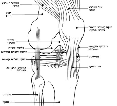 diagram of knee file knee diagram he png