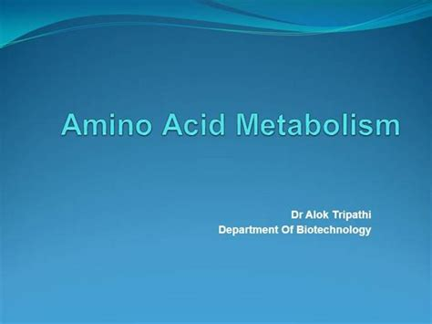 Amino Acid Metabolism Authorstream Ppt Of Acid