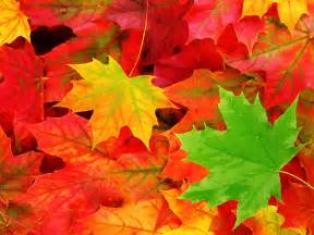 fall leaf colors pemandangan autumn leaves wallpaper