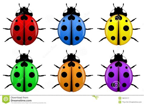 colors of ladybugs ladybugs in different colors isolated royalty free stock