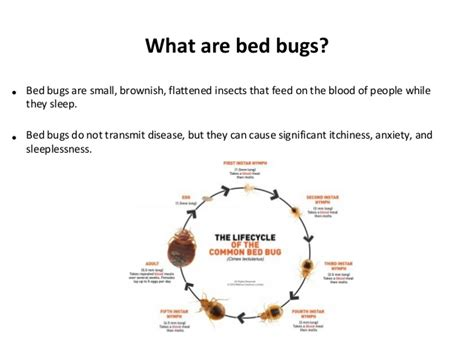bed bugs in schools do bed bugs come out in light earwig facts about earwigs