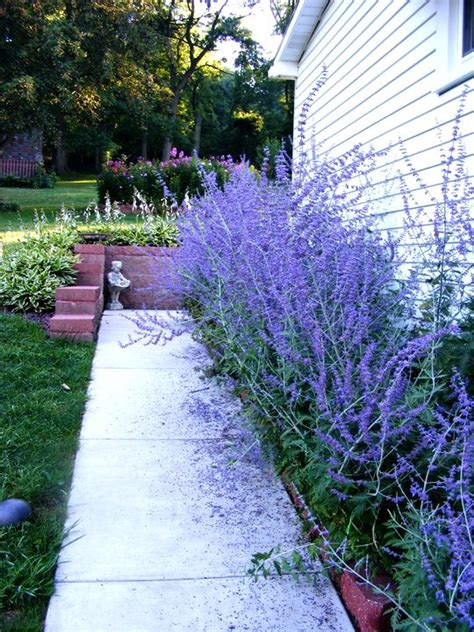 best plants for west side of house russian sage color pallets pinterest