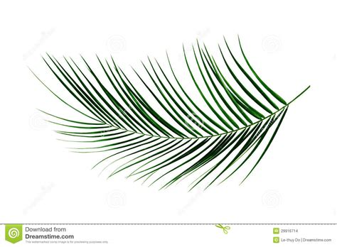 palm branch template palm leaf clipart clipart suggest