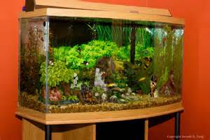 aquarium decoration ideas freshwater large freshwater fish tank 703906 tangsphoto stock