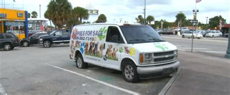 puppy stores in miami three miami pet stores vandalized in one broken windows graffiti among damage