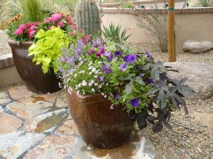 july in your hot dry container garden the potted desert
