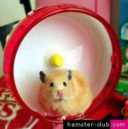 Wheel Hamster Kincir Hamster Mainan Hamster hamster club housing cage furnishings