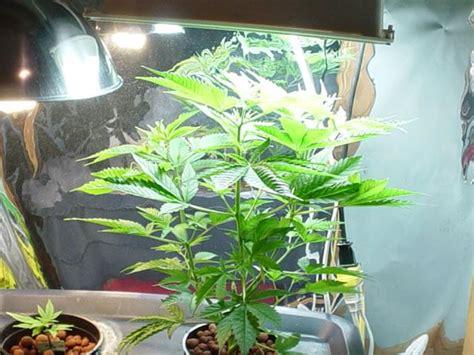 how to grow weed without lights cheap indoor marijuana grow room setup growing marijuana