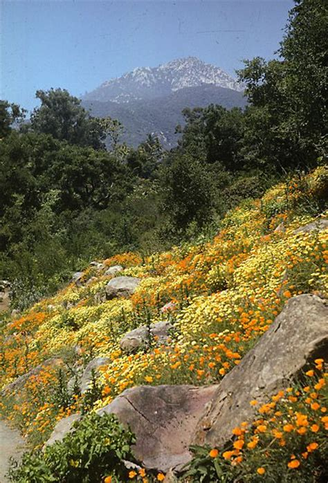 Santa Barbara Botanical Garden 37 Best Images About Botanical Gardens To Visit On