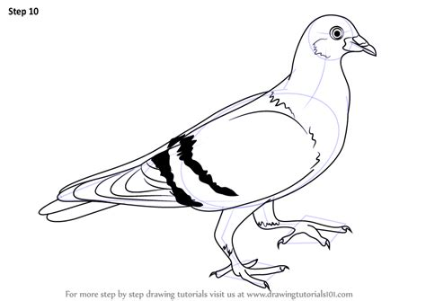 doodle how to make pigeon learn how to draw a pigeon birds step by step drawing
