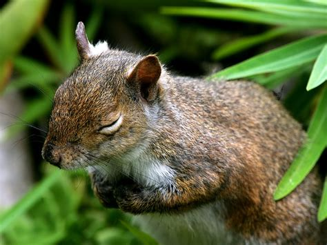 Squirrely for Squirrels on Pinterest   Squirrel, Red