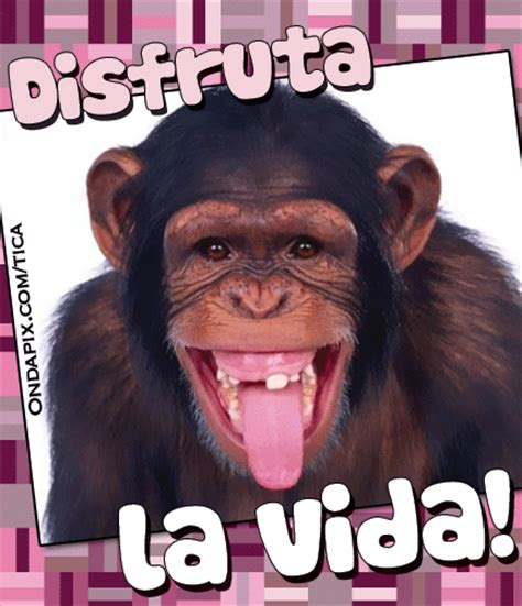 im 193 genes de monos chistosos con frases fotos de changos con frases imagui
