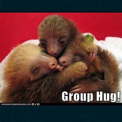 Group Hug Meme - 56 best sloths images on pinterest sloths sloth and ha ha
