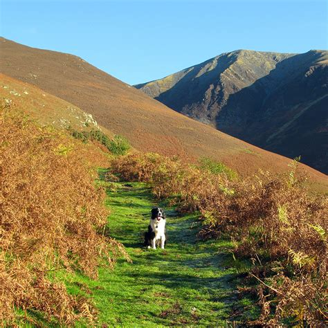 district dogs dogs invited dogs in the lake district dogs invited for friendly holidays