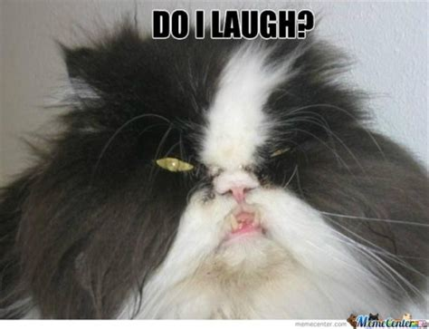 Ugly Cat Meme - ugly cat memes best collection of funny ugly cat pictures